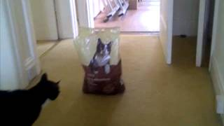 cat scared of cat on a bag