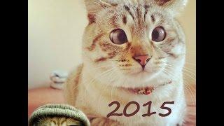 Смотреть приколы с котами  2015