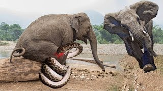 Elephant Big But Toxic From King Cobra It's So Scary, Elephant Save Elephant From King Cobra Fail
