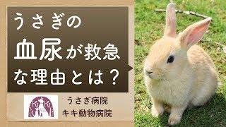 年末年始でも休まずに診察しています(大阪・堺の動物病院) 救急の場合...