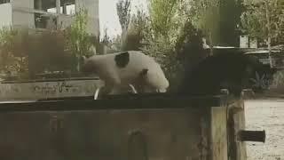 Majid#cat#iran