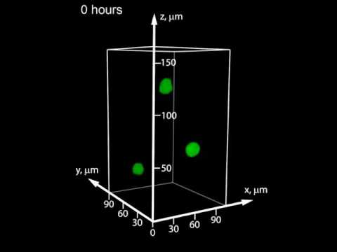 Cell division in liquid-like solid 3D growth medium