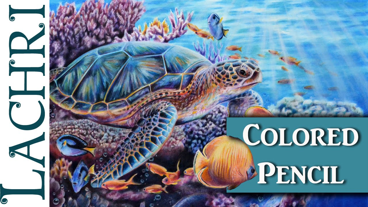 Colored Pencil Sea Turtle Part 2 demonstration w Lachri YouTube