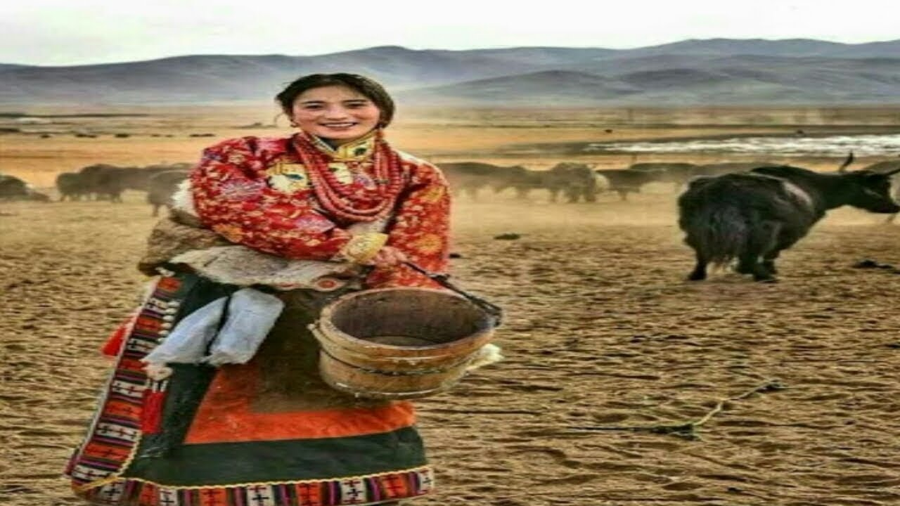 Nomad woman's life in Tibet Drokpa(Eng Chin Subtitles Full Documentary)