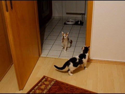 Katzenspielzeug Ente für Türrahmen von TRIXIE