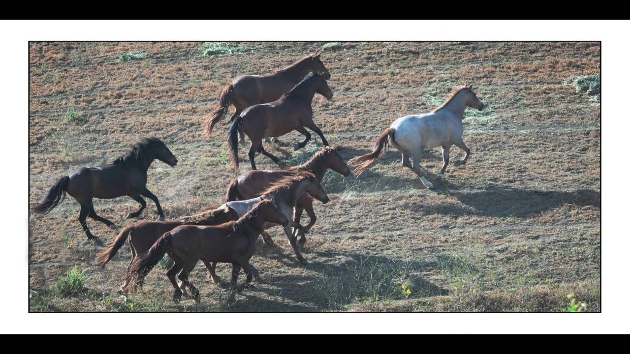 Return to Freedom American Wild Horse Sanctuary Opening Day May 2013