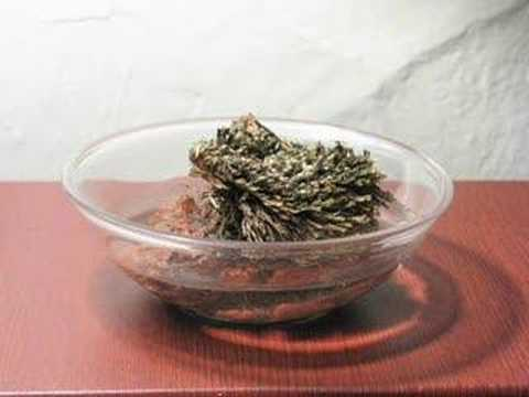 rose of jericho instructions