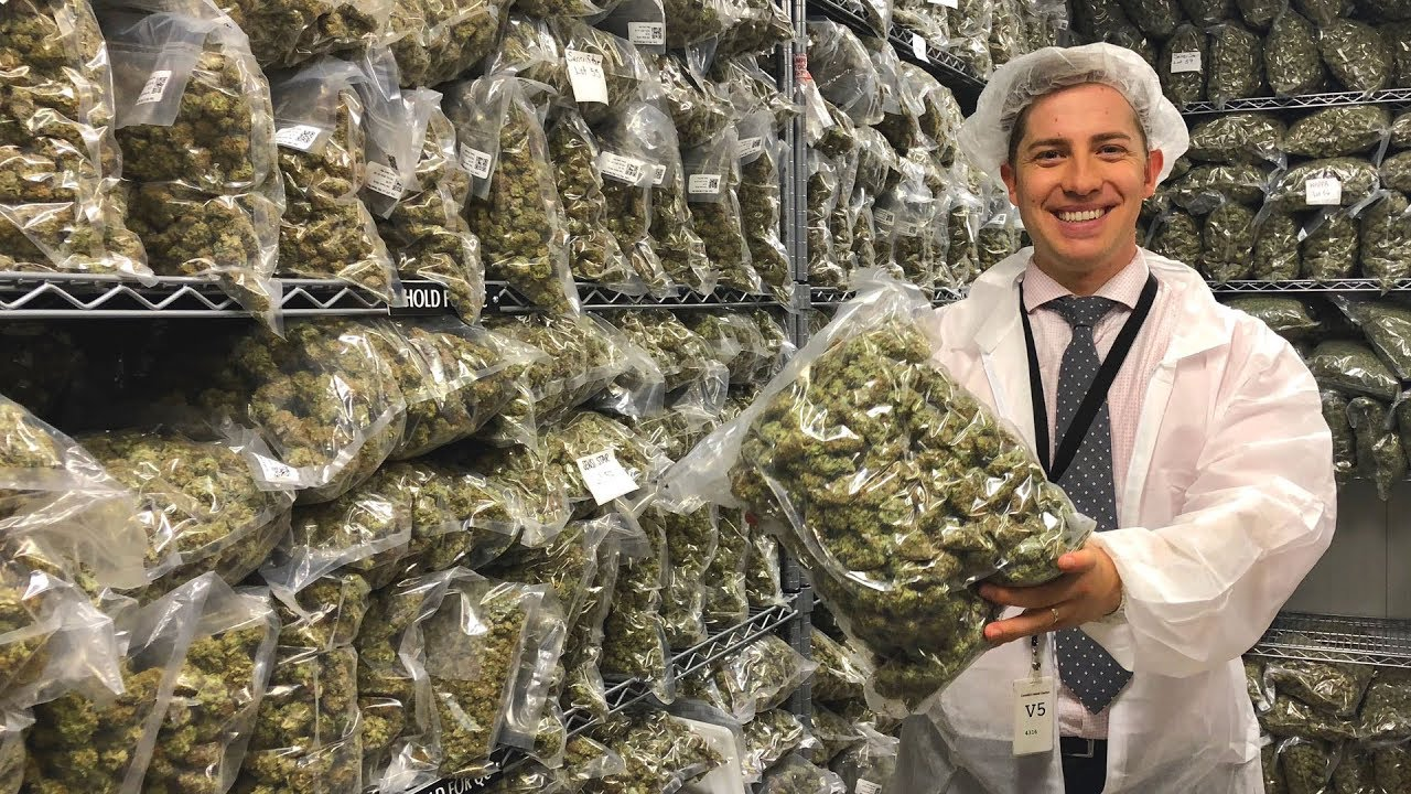 Inside a recreational pot factory in Canada