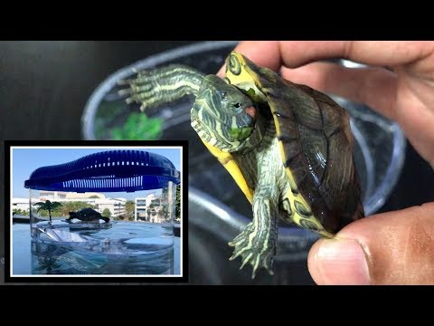 Turtle New Design Island Shape Tank | My Turtle New Home