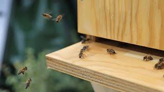 easyBeeBox: Ankunft der Bienen in Langenfeld