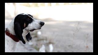 Spot Contro l'abbandono degli animali : Non abbandonare il tuo migliore amico