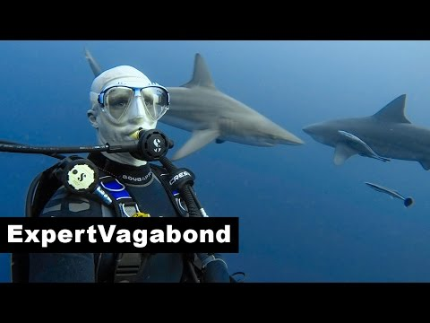PROTEA BANKS SHARK DIVE - South Africa