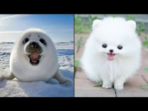Cute baby animals Videos Compilation cute moment of the animals – Dog and Cat SOO Cute #101