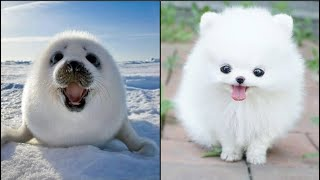 Cute baby animals Videos Compilation cute moment of the animals  Dog and Cat SOO Cute #101