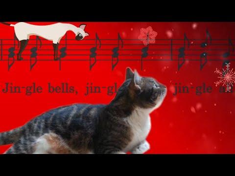 Cats sing Jingle Bells - Singing Cats | ComicCat