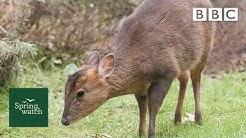 Our spring wildlife webcams live! 🐤🦊🐿 - Mon 8 June Late - Springwatch - BBC