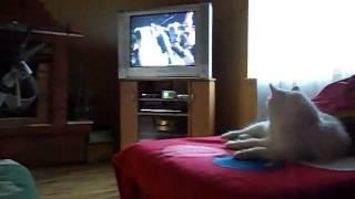 Кошка смотрит кино