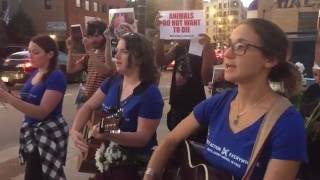 Activists in Chicago Stop Slaughterhouse Truck