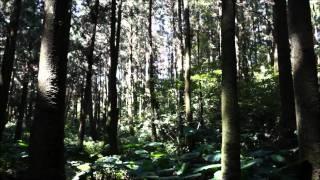 Majk Spirit - Sen ..video..
