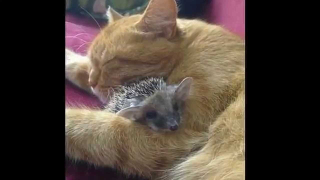 кошка кормит котят и ежей - YouTube