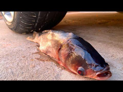 Crushing Crunchy & Soft Things by Car! - EXPERIMENT: FISH VS CAR