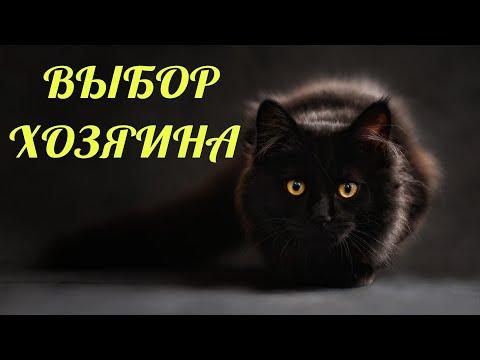 Вопрос: Почему кошки, когда гуляют, держатся всегда вместе?