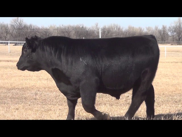 Express Ranches Lot 17