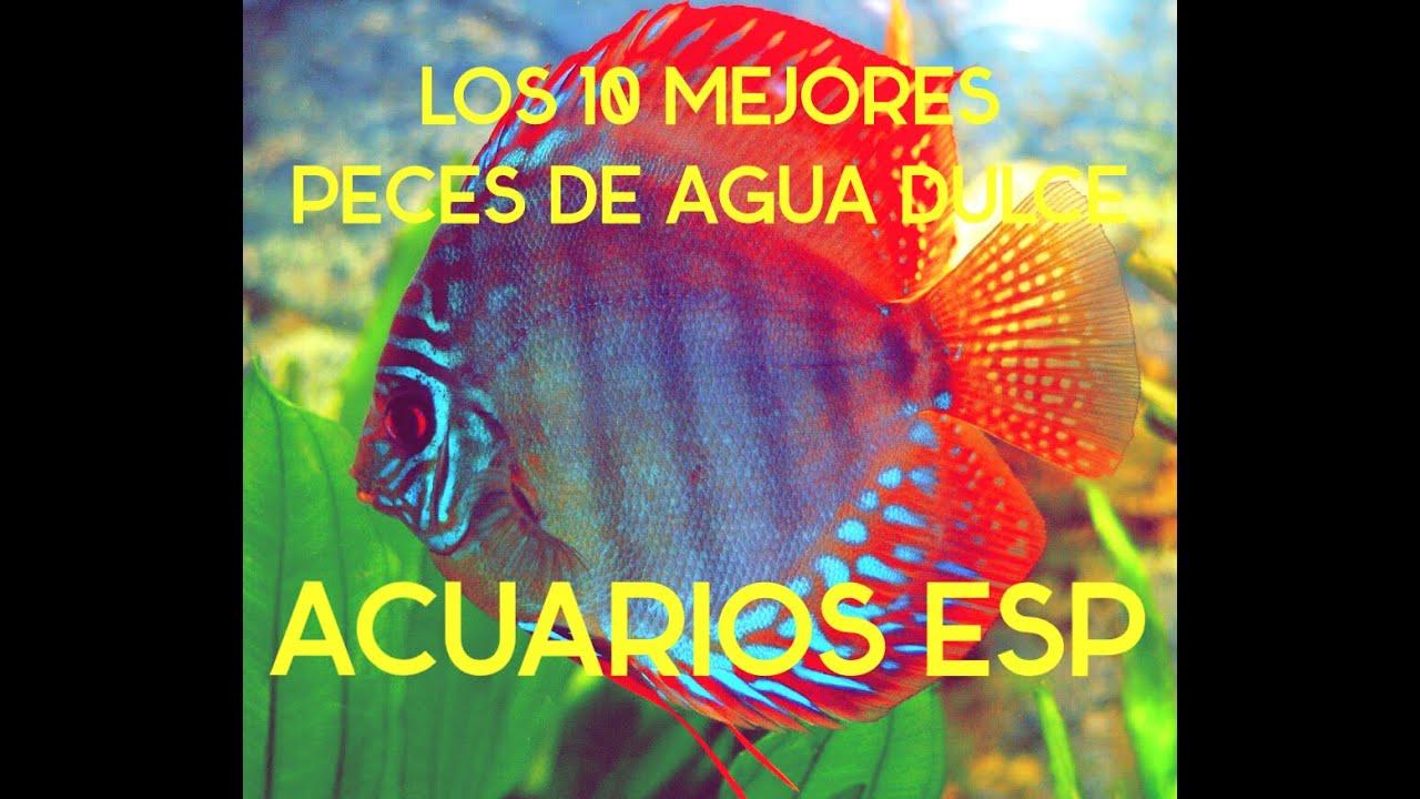 Los 10 mejores peces de agua dulce hd youtube for Mejores peces para acuario