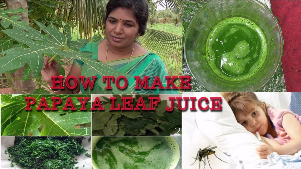 A LIFE SAYING DRUG FOR DENGUE AND MALARIA | HOW TO MAKE PAPAYA LEAF JUICE |  HEALTHY VILLAGE FOOD