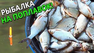 ЗДЕСЬ РЫБЫ ПРОСТО ТЬМА УСПЕВАЙ ЛОВИТЬ Рыбалка на удочку 2020 Ловля на поплавок