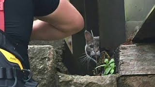 Cat sparks $7,500 rescue effort after getting 'stuck' on bridge, only to wander home on its own 6 da
