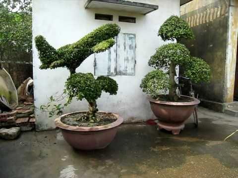 yeucaycanh.comcây cảnh đẹp Việt caycanhvietnam.com.net vinabonsai