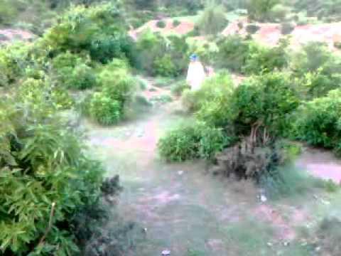 tanoli babar kanger bala sherwan lal khan tanoli