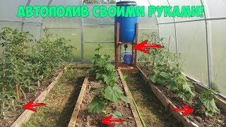 Автоматический полив растений в теплице своими руками с Алиэкспресс!