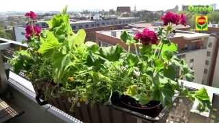 Rośliny na balkonach i tarasach