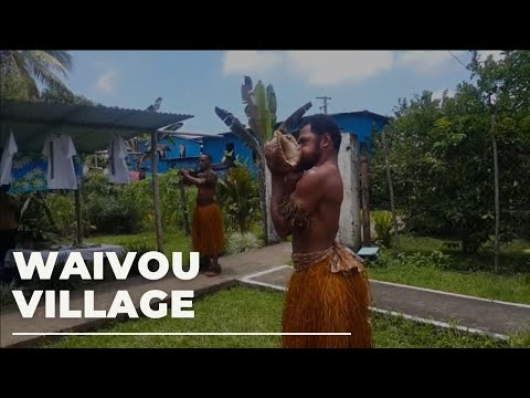 Waivou Fijian Village Cultural show - Kava, Dancing, Tradition