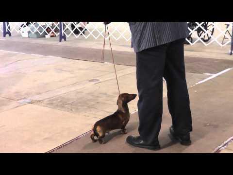 Salt City Cluster Spring Dog Show1