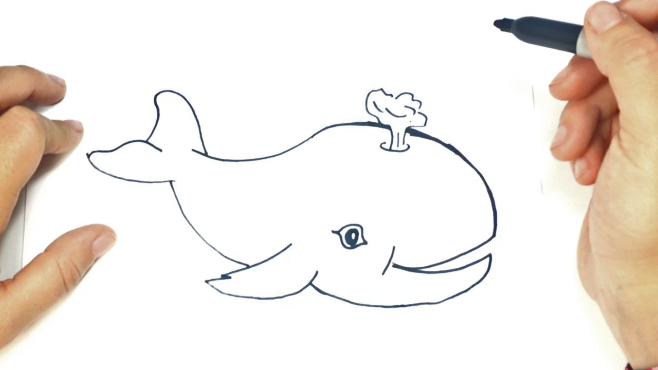 Worksheet. Cmo dibujar una Ballena paso a paso  Dibujo fcil de Ballena