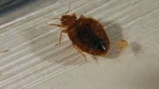 What to Spray for Bed Bugs Perth Amboy and Plainsboro New Jersey 732-640-5488