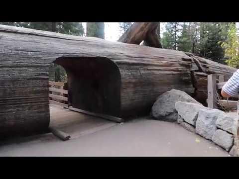 General Sherman Tree & General Sherman Tree Trail Sequoia National Park 2017