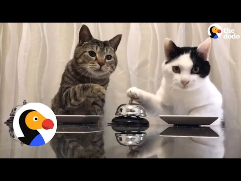 Cats Ring Bells For Treats | The Dodo