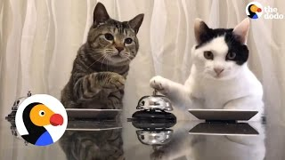 Smart Cats Ring Bell For Treats