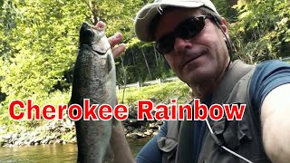 Cherokee Trout Fishing
