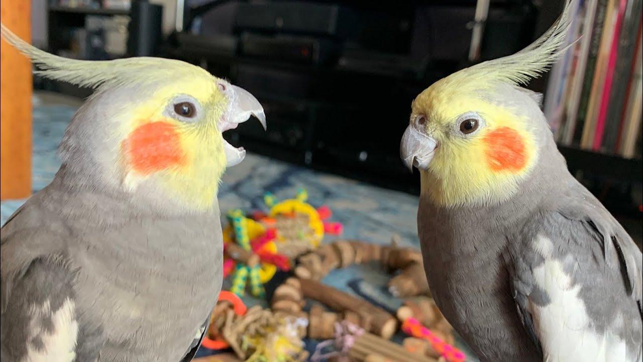 A Bunch of Birdie Cuteness