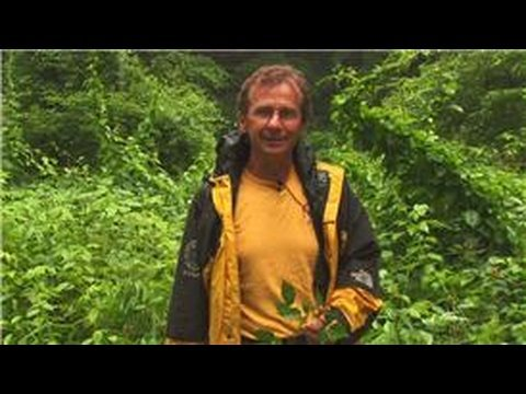 Wilderness Survival Tips : About Wild Edible Plants