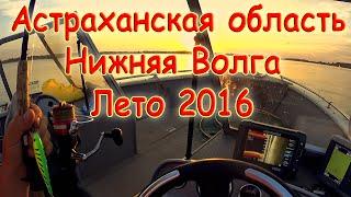 Астраханская область. Нижняя Волга. Лето 2016(, 2016-07-28T11:17:40.000Z)