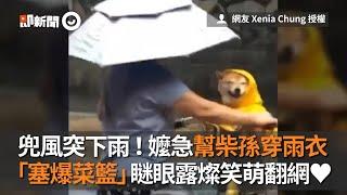 兜風突下雨!嬤急幫柴犬孫穿雨衣 牠「塞爆菜籃」瞇眼露燦笑|寵物|狗狗