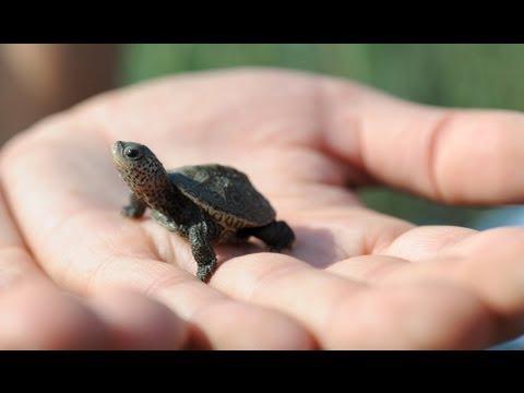 New Rare Cute Baby Turtles Funnydog Tv