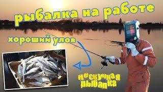 Рыбалка на работе. Река Паша. Ленинградская обл. Хороший улов
