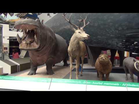 Brytyjskie śniadanie, Natural History Museum London, Victoria&Albert Museum - Londyn VLOG [12]